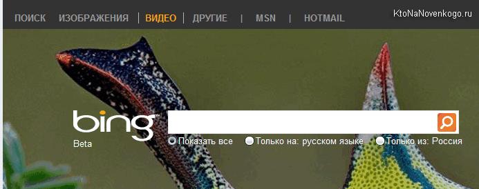Поисковая страница